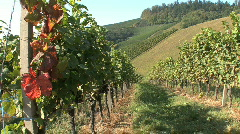 Germany Black Forest vineyard on a slope Stock Footage