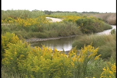 Goldenrod and canal in marsh LA Stock Footage