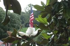 Natchitoches Magnolia & flag LA Stock Footage