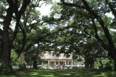 Oak alley to plantation house  Stock Footage