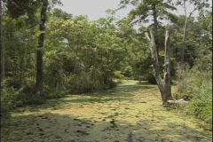 Bayou scene in Louisiana  Stock Footage