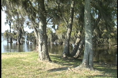 Park by cypress swamp LA Stock Footage