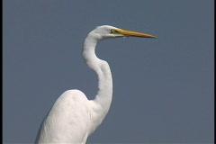Plaquemines Heron's head Stock Footage