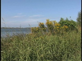 Stock Video Footage of Plaquemines river and goldenrod LA