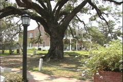 St Martinville Oak & lamp post LA Stock Footage