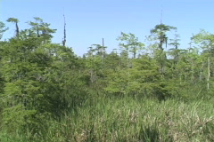 Pans across a Lousiana swamp  Stock Footage