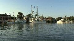 Tarpon Springs boats & bird flies Stock Footage