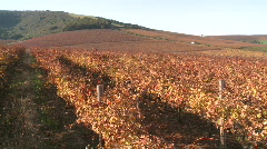 Jib shot over autumn winelands Stock Footage