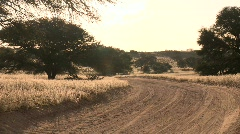 Backlit road in Kalahari desert Stock Footage