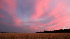 landscape with wheat field after sunset - stock footage