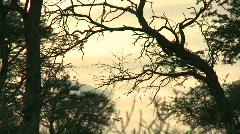 Eerie light in Kalahari bushveld Stock Footage
