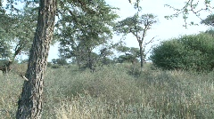 Kalahari bushveld static Stock Footage