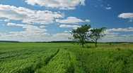 Stock Video Footage of Green field, two trees, white clouds flying on blue sky