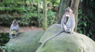Stock Video Footage of Two young monkeys