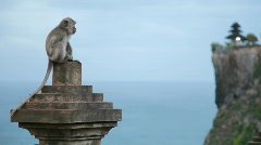 Monkey at temple Stock Footage