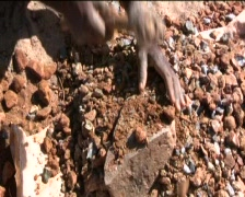 African woman working - stock footage