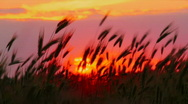 Sunset on the field Stock Footage