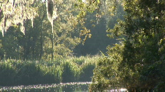 Satilla River Georgia Stock Footage