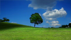 tree on field - VERY LOW PRICE SALE!! limited time - stock footage