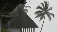 Stock Video Footage of Rain falls heavily at a tropical beach resort with palms in background.