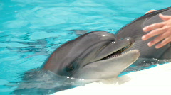 Dolphin Pool Stock Footage