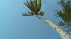 A low angle view looking straight up at a palm tree blowing in the wind. Stock Footage