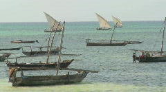 Dhow sailboats head out to fish off the coast of Zanzibar. Stock Footage