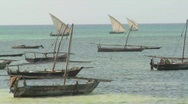 Stock Video Footage of Dhow sailboats head out to fish off the coast of Zanzibar.