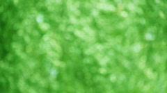 Green leaves in the wind defocused Stock Footage