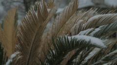 Frozen Fern Stock Footage