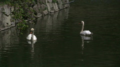 Swan Pair In Moat Stock Footage