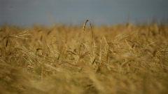 Growing food Stock Footage