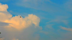 Flying flocks of black birds Stock Footage