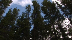 Trees & Clouds Stock Footage