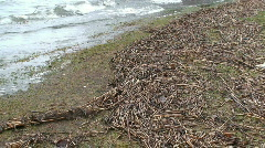 Dry reed grass at sea shore after storm 1 Stock Footage