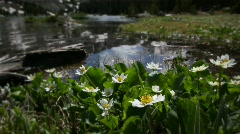 (1208) Colorado Rocky Mountains Alpine Wildflowers Summer Tourism Lake Outdoo Stock Footage