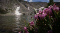(1209) Colorado Rocky Mountains Alpine Wildflowers Summer Tourism Lake Outdoo Footage