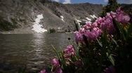 Stock Video Footage of (1209) Colorado Rocky Mountains Alpine Wildflowers Summer Tourism Lake Outdoo