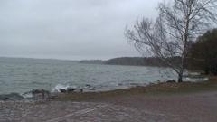 Birch tree at storm near sea shore 3 - stock footage