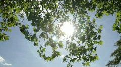 Sun shining trough tree leafs Stock Footage