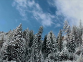 Stock Video Footage of Time Lapse Snowy Pine Forest  NTSC