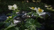 (1213) Colorado Rocky Mountains Alpine Wildflowers Summer Tourism Waterfall  Stock Footage