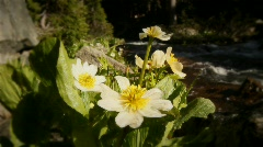 (1215) Colorado Rocky Mountains Alpine Wildflowers Summer Tourism Waterfall  Stock Footage