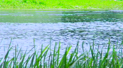 Beautiful riverside in the nature - stock footage