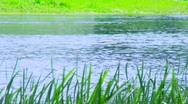 Beautiful riverside in the nature Stock Footage