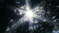 Reflection of the sun rays through the trees Stock Footage