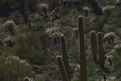 Saguaro National Park NTSC Stock Footage