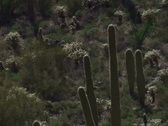 Stock Video Footage of Saguaro National Park NTSC