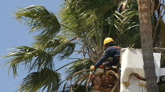 Trimming Palm Tree with Saw - stock footage