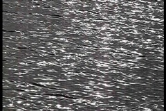 Water surface blink silver Stock Footage